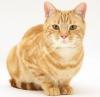 Формула одомашненной кошки