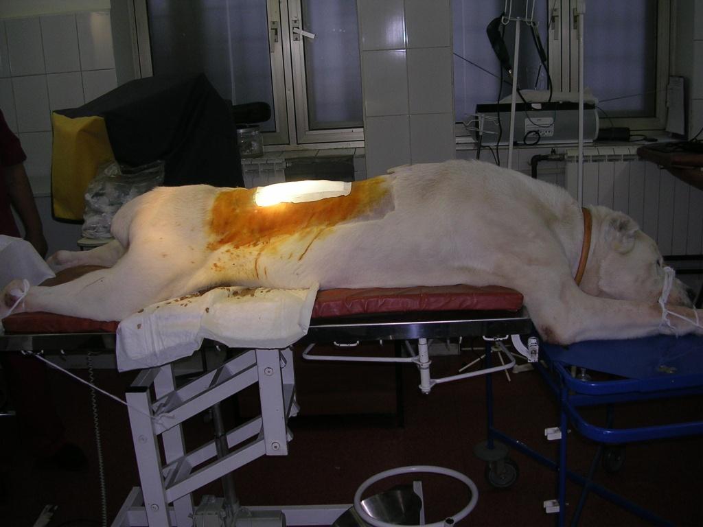операция у алабая