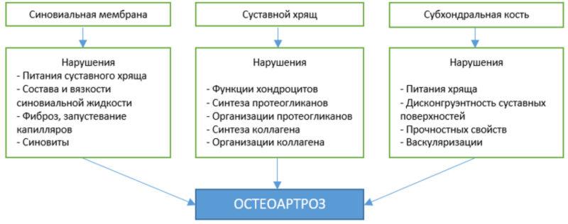 Варианты структурных нарушений в тканях суставов при остеоартрозах