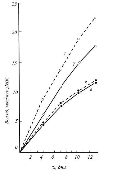 Влияние румалона на биосинтез протеогликанов
