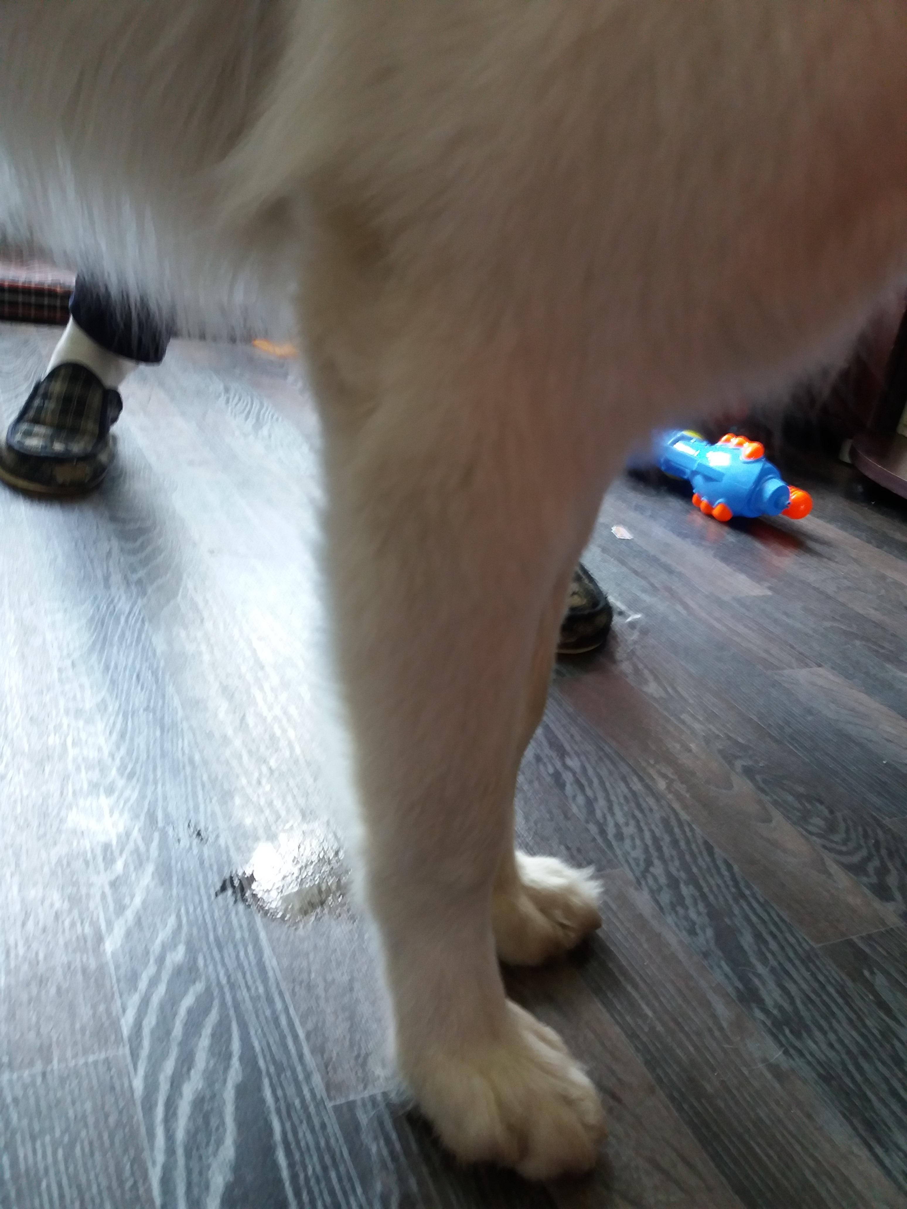 добрые, жизненные фото передних лап у щенка размет что